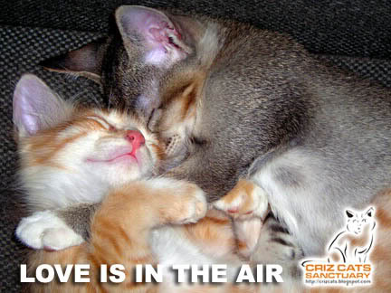 LOVE IN THE AIR
