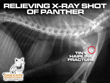 PANTHER X-RAY