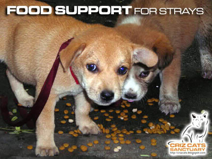 SUPPORT05